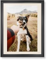 pet photo gallery framed print