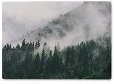 evergreen mist wall art