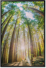 forest trees wall art